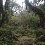 Fanggorn-Wald