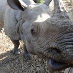 Das blinde Nashorn, Nationalparksmaskottchen