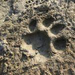 Kommentar unseres Guides: Big Tiger!